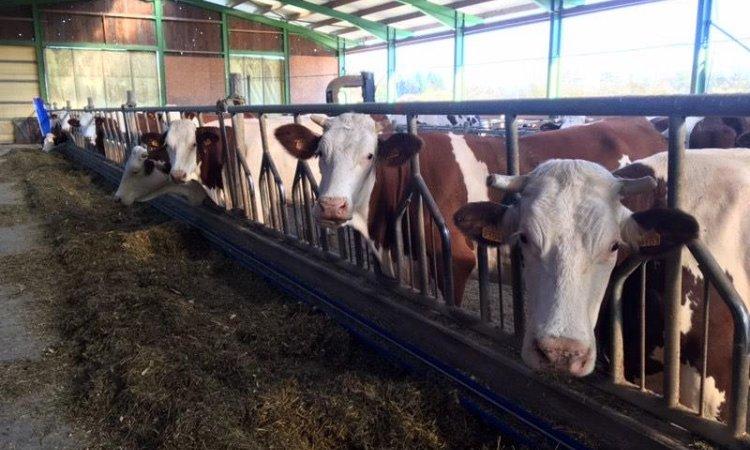 La ferme de Reculefort La Tour-du-Pin - Vente de produits issus de la ferme directement